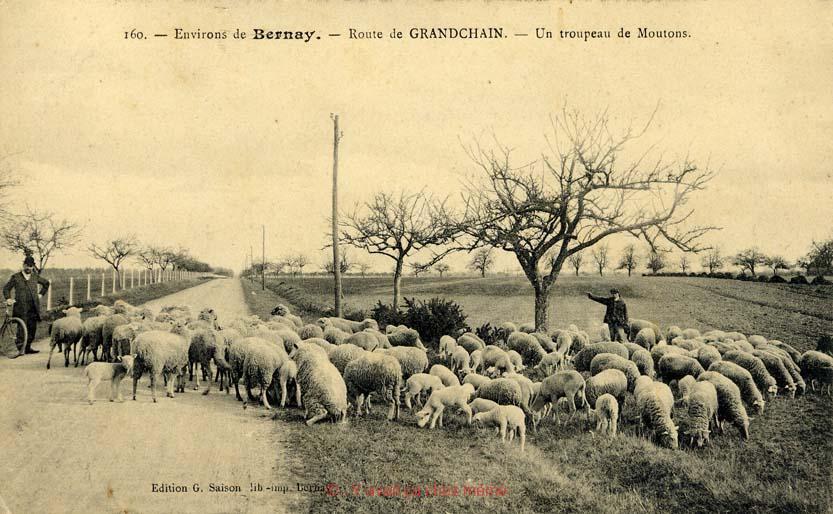 Granchain - Un troupeau de moutons