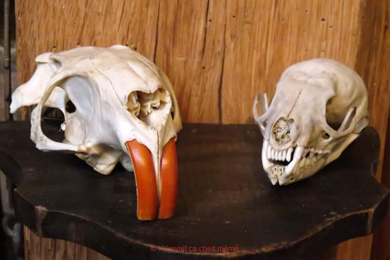 Cabinet de curiosités - Ragondin et fouine