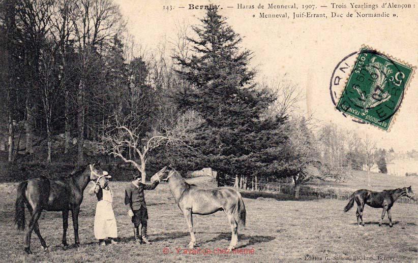 Haras de Menneval 1907 - Trois Yearlings d'Alençon : Menneval, Juif-Errant, Duc de Normandie